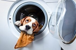 StarBrite Coin Laundry and Laundry Services - Let Us Do Your Laundry!